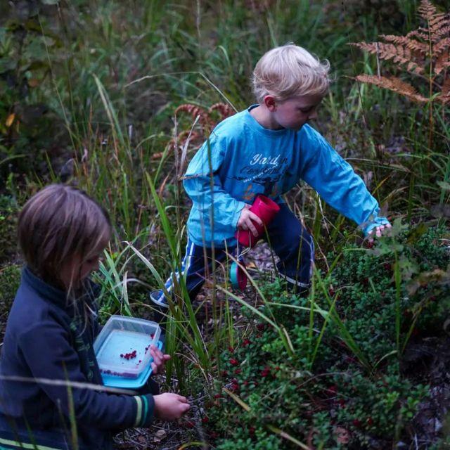 Syksyn sadon keruu ja säilöminen on kovassa vauhdissa 🙌 Ihanaa, kun lapset innostuvat myös marjoista, ompuista ja sienistä 💯 . Mitä teillä kerätään juuri nyt? . #syksy #autumn #marjat #marjastus